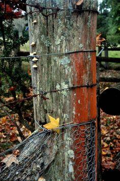 Bird Feeders, Fence, Australia, Outdoor Decor, Home Decor, Decoration Home, Room Decor, Home Interior Design, Home Decoration
