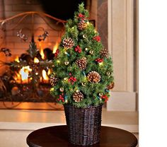 This little Alberta Spruce tree has the same fine needles and dense branching as the big guys, and it comes with battery-operated, LED lights so there are no wires to fuss with. It is trimmed with gold balls, faux red berry bunches, and golden Pine cones. The potted, live tree is slipped into a 7″ woven basket. To keep your tree looking its best, place it in a cool area away from direct sunlight. Full instructions for care included (gardeners in Zones 3–7 may wish to give their dwarf t...