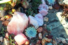crystals and succulents ♥