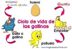 Ciclos vitales en imágenes y sencillos para niños                                                                                                                                                                                 Más