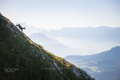 Chamois in the Austrian Alps - Salzburg, Austria. Image available for… Salzburg Austria, Alps, My Images, Landscapes, Mountains, Instagram, Silhouettes, Nature, Photography
