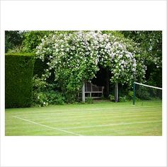 Organic Gardening In Pots Orchard Design, Sloped Garden, Lawn Tennis, Garden Inspiration, Organic Gardening, Garden Landscaping, Outdoor Gardens, Backyard, House