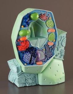 3B Plant Cell Model | Ward's Science