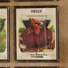 Framed Vintage Inspired Seed Packet Prints - Onion    $24.00@http://antiquefarmhouse.com/current-sale-events/fall-wall-decor.html