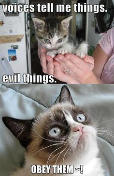 50 Funny Grumpy Cat Memes That Will make your Day… Or Not Grumpy Cat Quotes, Funny Grumpy Cat Memes, Cat Jokes, Funny Animal Jokes, Cute Funny Animals, Funny Animal Pictures, Animal Memes, Funny Cute, Hilarious