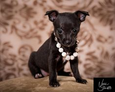 Do you want a professional portrait of your pets? A photo you will be proud to show your family friends and neighbors? This is my goal. #VasiStudio #PalmBeachGardens #PalmBeach #WestPalmBeach #Jupiter Contact: Vasi Studio (561)-307-9875 info@vasistudio.com Visit www.vasistudio.com #PetPhotography #PetPortrait #PetPhotographer #PetArt #AnimalArt#toppetphotographer #florida #Stuart #topratedphotographer #Pets#Photography #Animals #USphotographer #photographer #photoart #studiophotography