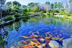 31 Fun Activities In Long Beach California