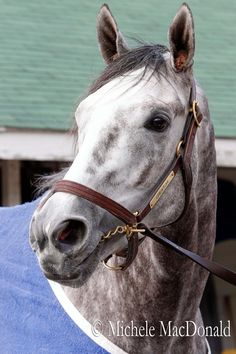 #Creator bred for Test of Champion: 6 Belmont wnrs in 1st 5 gens of ped, 3 Euro Classic wnrs & N Dancer
