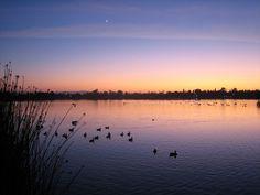 Lake Elizabeth, Fremont, CA