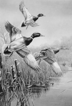Either – Hobby Sports Pencil Drawings Of Animals, Animal Sketches, Bird Drawings, Art Sketches, Duck Drawing, Painting & Drawing, Black And White Art Drawing, Duck Art, Pyrography Patterns
