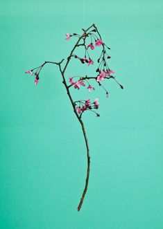 Blossom by Raw Color | PICDIT in Color