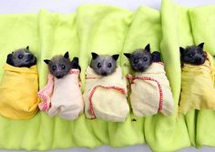 Who says bats aren't cute?