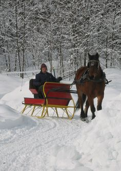 326 Best Sleigh Rides Images In 2019 Horses Sled Snow