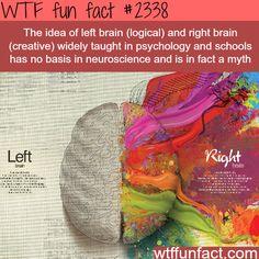 Left Brain VS Right Brain myth - WTF fun facts