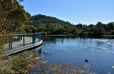 Enjoying the loop walk at Te Waikoropupū Springs.