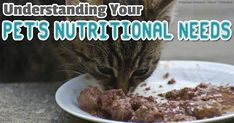 Don't Feed This to Your Pets – It Can Make Them Obese and Sick - Carbohydrates