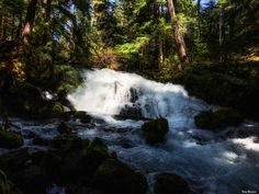 'White Water Rapids' -  Deep in the forest in Oregon.