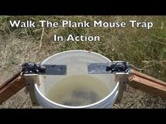 Original Walk The Plank Mouse Trap - Auto Reset-Better Than Log Rolling-Usa Made Mouse Trap Diy, Best Mouse Trap, Homestead Survival, Camping Survival, Homemade Mouse Traps, Trip Wire Alarm, Mouse Catcher, Getting Rid Of Mice, Rat Traps