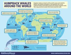 Humpback Whales Around the World