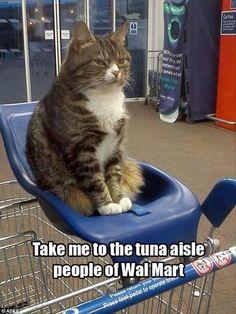 #Weird cats