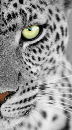 animal wallpaper Best Friends iPhone Wallpaper - i - animals Cats Wallpaper, Leopard Wallpaper, Tier Wallpaper, Animal Wallpaper, Screen Wallpaper, Big Cats, Cats And Kittens, Cute Cats, Beautiful Cats