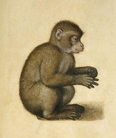 Albrecht Dürer. (Alberto Durero)