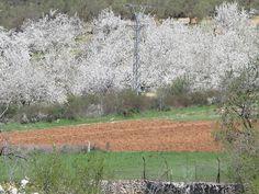 HOTEL R** DOÑA SANCHA: Fotos y Vídeo de Cerezos en flor en Covarrubias (Burgos) 19 Abril 2013