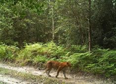 Leopard spotted in Knysna Forest Unlikely Friends, Knysna, Leopard Spots, Biomes, End Of The World, South Africa, Safari, Country Roads, Biology