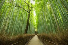 📍 Arashiyama Bamboo Grove - 📸 Tapanuth Termboonvanich | Discovered via Mustsee - http://mustsee.earth