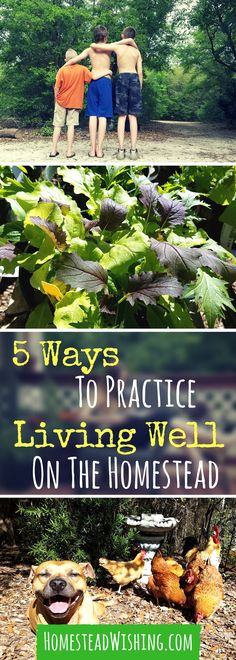 #ad #TeaProudly - I want to remind you about why you got into homesteading in the first place. 5 ways to practice living well on the homestead. | Homestead Wishing, Author Kristi Wheeler | homestead-wellness, finding-balance |