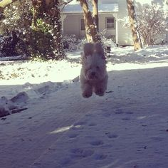 """From """"Outdoor Pets, Indoor Pets"""" story by NPR News on Storify — http://storify.com/nprnews/pets"""
