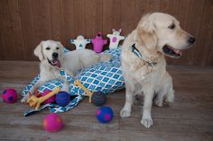 Isabella Cane Bed Collars & Toys