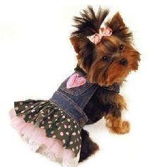 moldes de roupas para cães + vídeos - fabrique 20 modelos