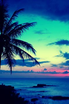 Nothing better sunset tropical paradise palm