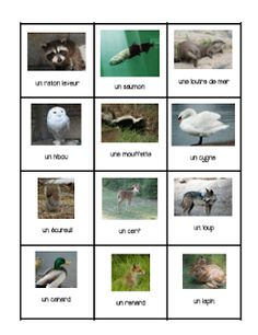 Primary French Immersion Resources: Les animaux Canadiens Spanish Teaching Resources, French Resources, Core French, French Class, French Teacher, Teaching French, Science Lessons, Science Activities, Language Immersion