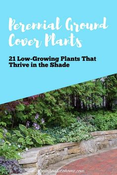 Great list of perennial ground cover plants that love the shade! There are so many different options that are low maintenance and will help prevent weeds in my garden. Partial Shade Perennials, Shade Flowers Perennial, Flowers Perennials, Shade Plants, Perennial Ground Cover, Ground Cover Plants, Dwarf Plants, Tall Plants, Perennial Bushes