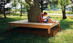 Tree Bench. Cedar