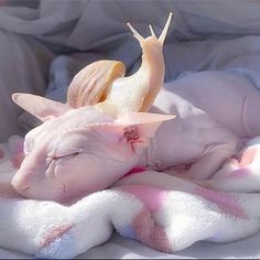 Super Cute Sphynx cat and her Snail friend. Cute Creatures, Beautiful Creatures, Animals Beautiful, Animals And Pets, Baby Animals, Cute Animals, Chat Sphynx, Hairless Cats, Cat Ideas