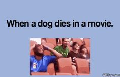 Omigosh YES! I'm always like, I don't care about the person I am worried about the dog! Lol!
