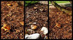 mushrooming on Všemina. The mushrooms everywhere!