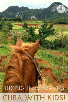 Cuba With Kids: Horse-riding in Viñales. One of the best ways to see Viñales is in the saddle. We hired four horses to take us for a three-hour ride (which included a coffee break and stretch of legs) in the valley's red hills and tobacco plantations.