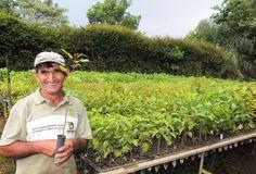 Conheça a profissão dedicada a cuidar das futuras florestas