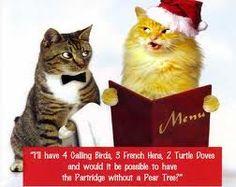 xmas cats pics - Google Search