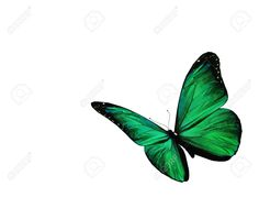 Green Butterfly Flying Stock Photo, Picture And Royalty Free Image ...