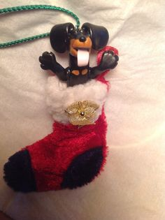 Blk/tan in a stocking