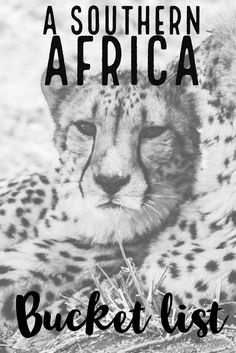 A safari in South Africa, swimming in Mozambique, Cruising in Zimbabwe, or seeing the largest mammal migration in Zambia. Here is the greatest Southern Africa bucket list. Africa Destinations, Holiday Destinations, Travel Destinations, Chobe National Park, Most Beautiful Animals, African Countries, African Safari, Greatest Adventure, Africa Travel