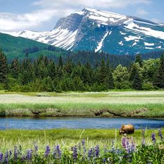 Lake Clark National Park & Preserve in Alaska is a land of stunning beauty. The park is home to volcanoes, salmon-filled streams, foraging bears and craggy mountains reflected in shimmering turquoise lakes. National Park Service photo.