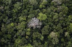 Tropical deforestation is one of the great challenges facing humanity. If we don't slow it down soon, the chances of avoiding disastrous climate change, species loss and the disruption of indigenous… Rainforest Trees, Amazon Rainforest, World Economic Forum, Tropical Forest, Aerial View, Climate Change, Wildlife, Forests, Ant Species
