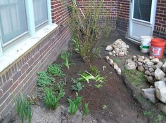 Rose bush in, roots hidden under existing bee balm (that was lifted and put back over the top of the roots), Bluebells transplanted, a new day lily came along for the ride with the rose bush. Now for the water!