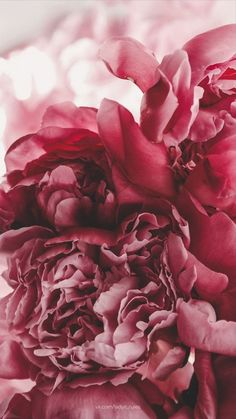 25 super Ideas for wall paper backgrounds flowers pastel Peonies Wallpaper, Flower Phone Wallpaper, Aesthetic Drawing, Flower Aesthetic, Beautiful Flowers Wallpapers, Cute Wallpapers, Aesthetic Iphone Wallpaper, Aesthetic Wallpapers, Flowers Background